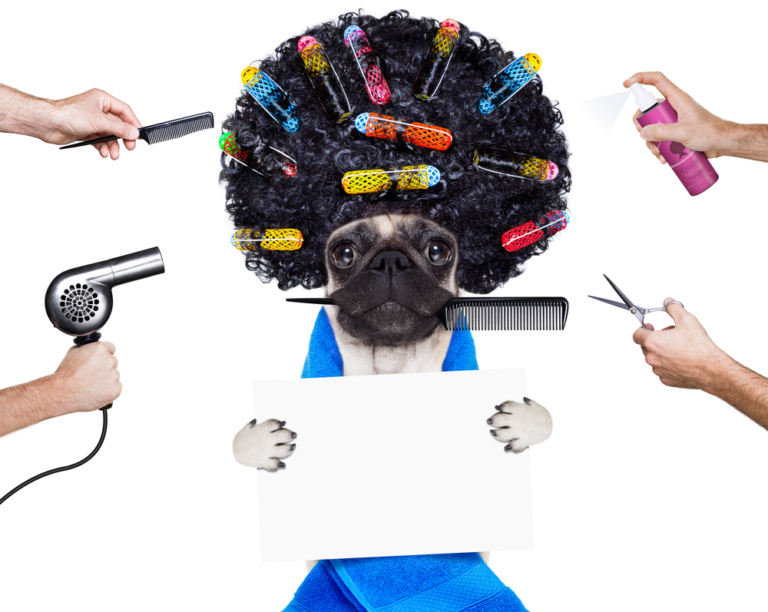 Dog Grooming 101 – Top 6 Things You Need To Know