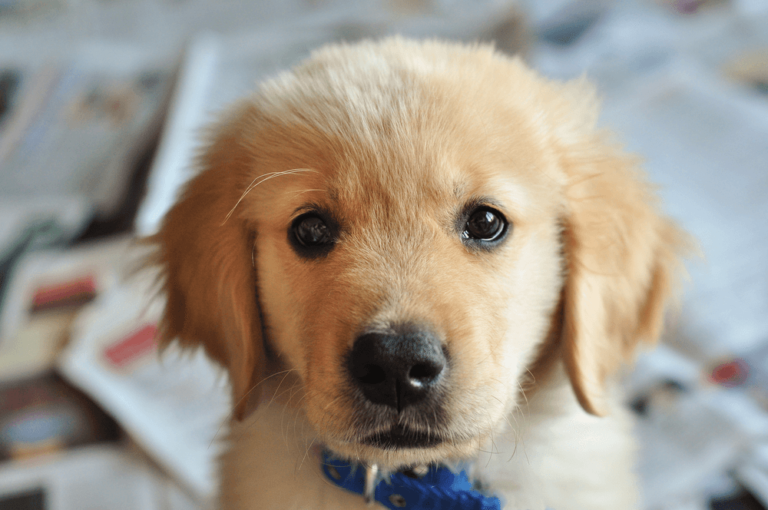 Easy & Fast Steps To Potty Train Your Puppy