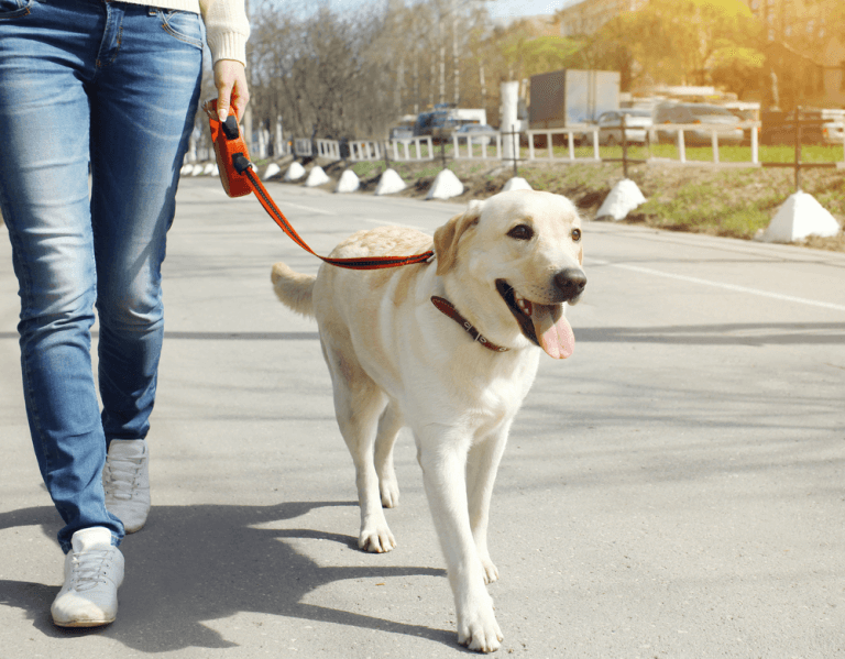 Top safety tips to make dog walking a fur-filled experience